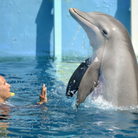 ReelAbilities, Houston Disabilities Film Festival 2015: Dolphin Tale 2