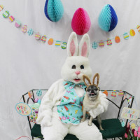 Doggie Pictures with the Easter Bunny benefiting Shaggy Dog Rescue