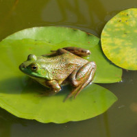 Houston Arboretum & Nature Center Presents Wine, Cheese & Frogs