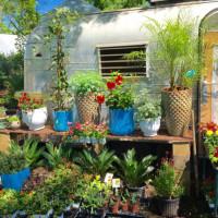 Tillery Street Plant Co. Austin nursery