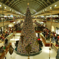 Events_Christmas_Tree_1113
