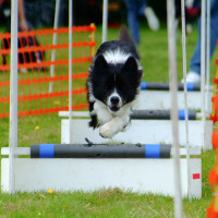 News_Peter Barnes_Flyball_Dec. 2009_training_dog