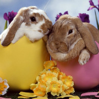 News_Easter eggs_bunny