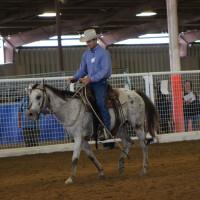 Bluebonnet Horse Expo