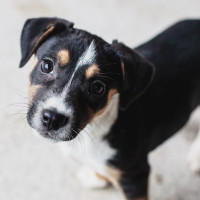 Ken Hoffman new puppy Citizens for Animal Protection
