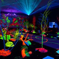 Aquashella Aquarium Festival