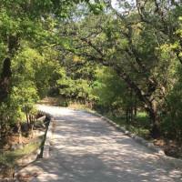 San Antonio park trail trees