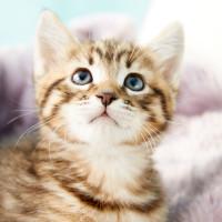 Prairie Paws Adoption Center presents Cat Cafe