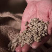 Palmieri Cafe coffee beans