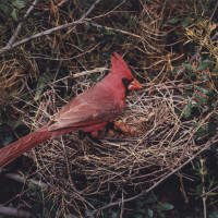 Amon Carter Museum of American Art presents Eliot Porter: Eliot Porter's Birds