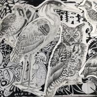 Conduit Gallery presents Jules Buck Jones: Birds of America