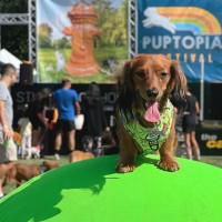 Puptopia Festival 2020