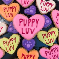 Bakery Lorraine + Austin Pets Alive! Adoption Event