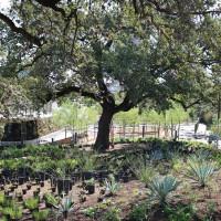 Waterloo Greenway Park planting