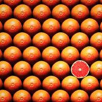Grapefruit slice between group, Fine Art America