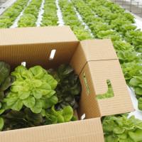 Moonflower Farms butter lettuce box