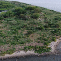 North Deer Island