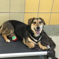 Adoptable dog Celeste
