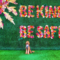 """Dog in front of """"be kind be safe"""" floral wall in Plano"""