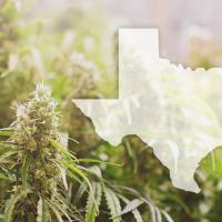 Texas state shape with cannnabis marijuana