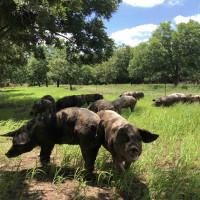 Zanzenberg Farm San Antonio