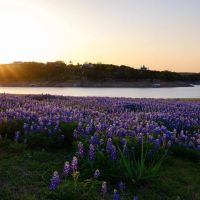 Marble Falls and bluebonnets