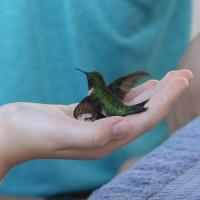 Xtreme Hummingbird Xtravaganza