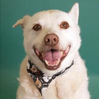 Adoptable dog Mr. Shelby