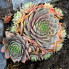 : 6 stunning succulents to plant in your garden