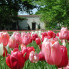 ": Dallas Arboretum presents Dallas Blooms: ""America the Beautiful"""