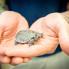 Steven Devadanam: 4 critically endangered baby turtles hatch at Houston Zoo