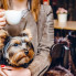Steven Devadanam: Luxurious new cafe and pet boutique pampers pooches and owners in west Houston