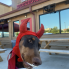 Chantal Rice: San Antonio barbecue staple cooks up Halloween benefit for local pets