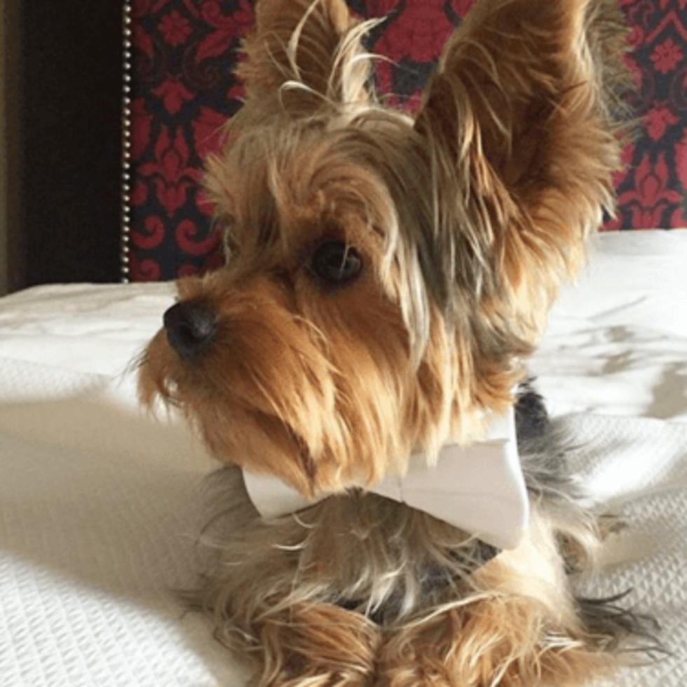Hotel ZaZa Houston pet-friendly