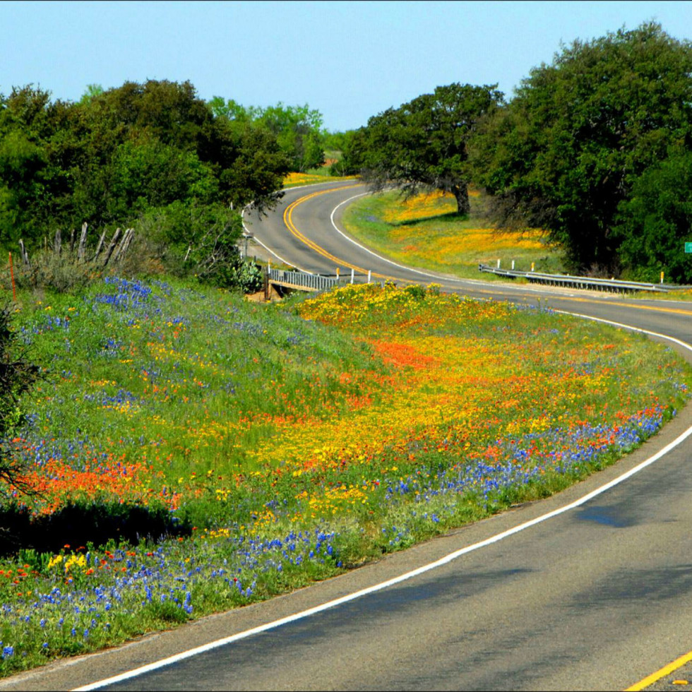 Lady Bird Johnson Wildflower Center presents Wildflower Roadside Tour 2017