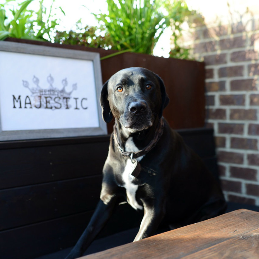 Dog at Henry's Majestic in Dallas