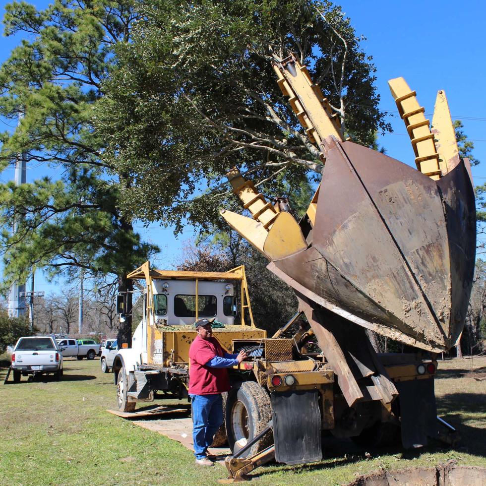 Apache tree planting, Memorial Park, Jan. 2016, redbud trees for babies