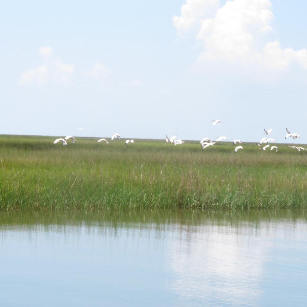 News_16_Katie_Louisiana_Birds habitat_83