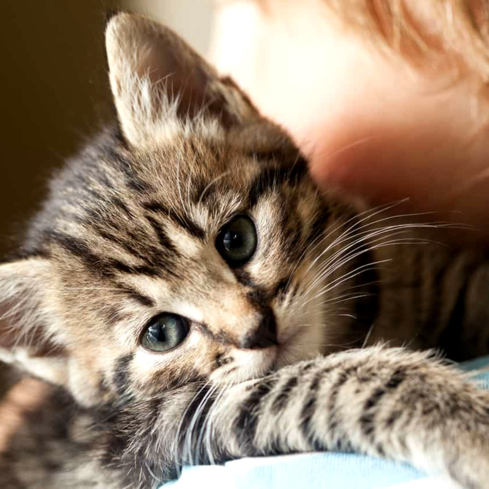 Cat Hug National Hug Your Cat Day