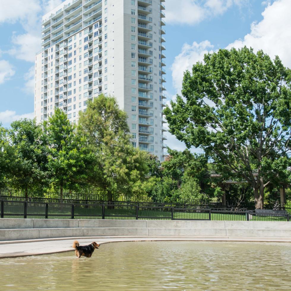 Johnny Steele Dog Park Allen Parkway dog in water