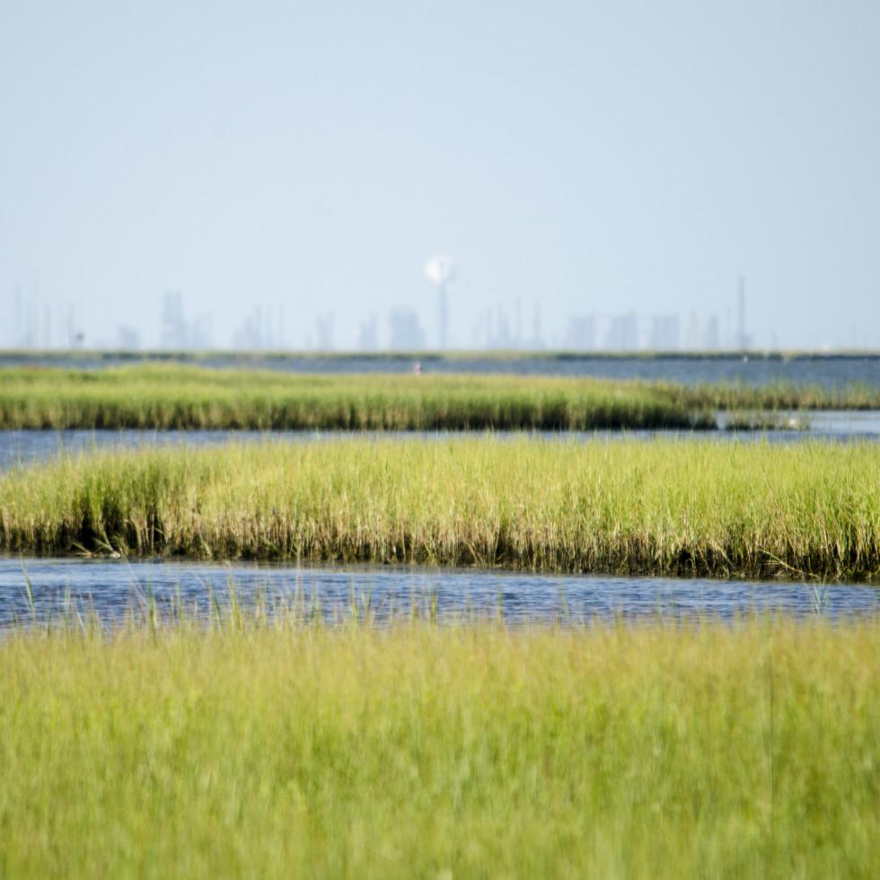 Galveston Bay wetlands