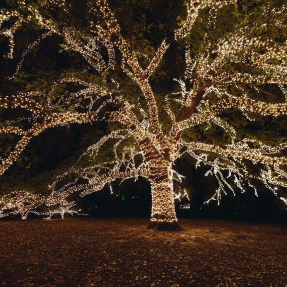 The Houstonian Hotel oak tree lights holiday