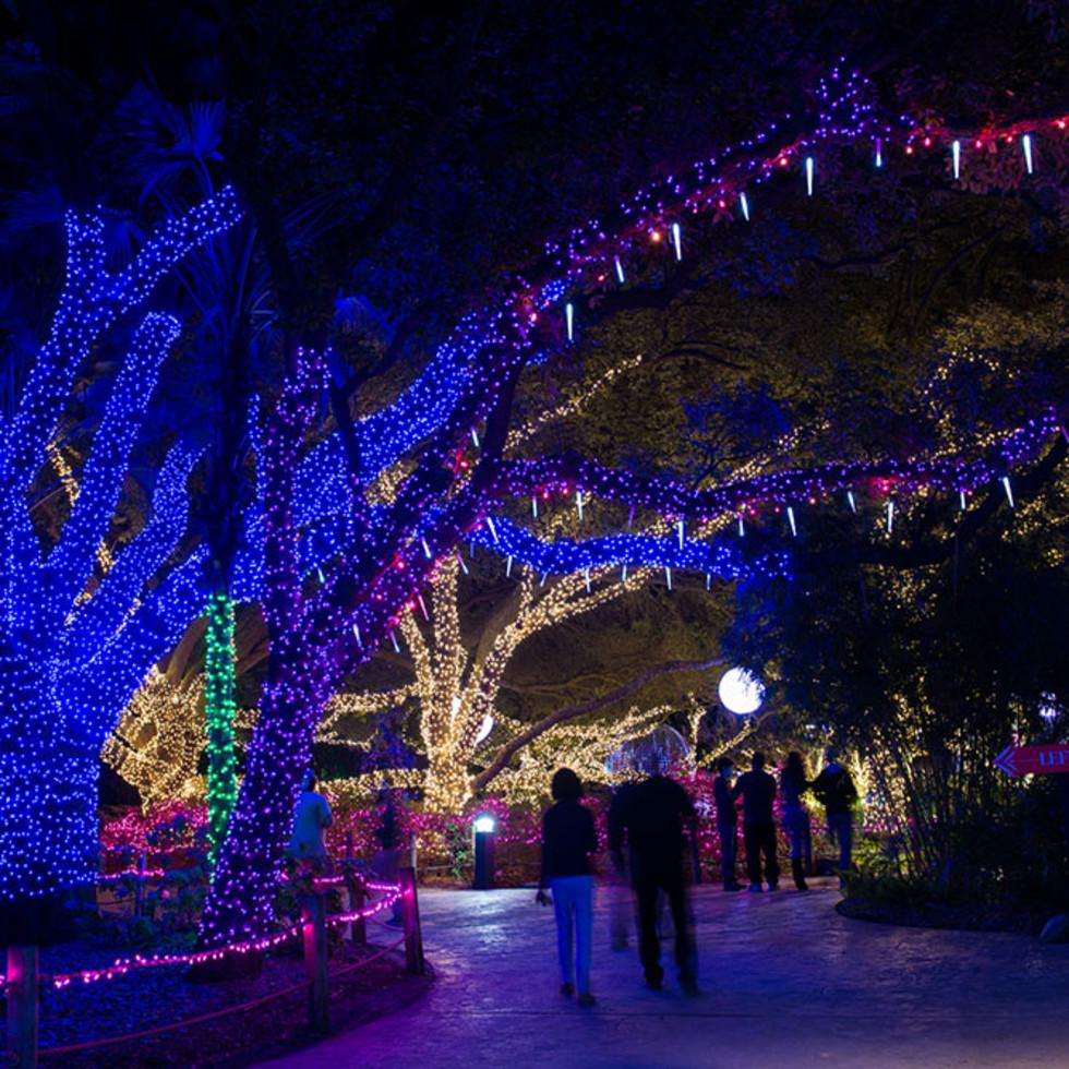 Zoo Lights Houston Zoo 2014