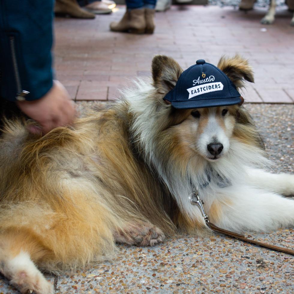 Dog wearing Austin Eastciders hat