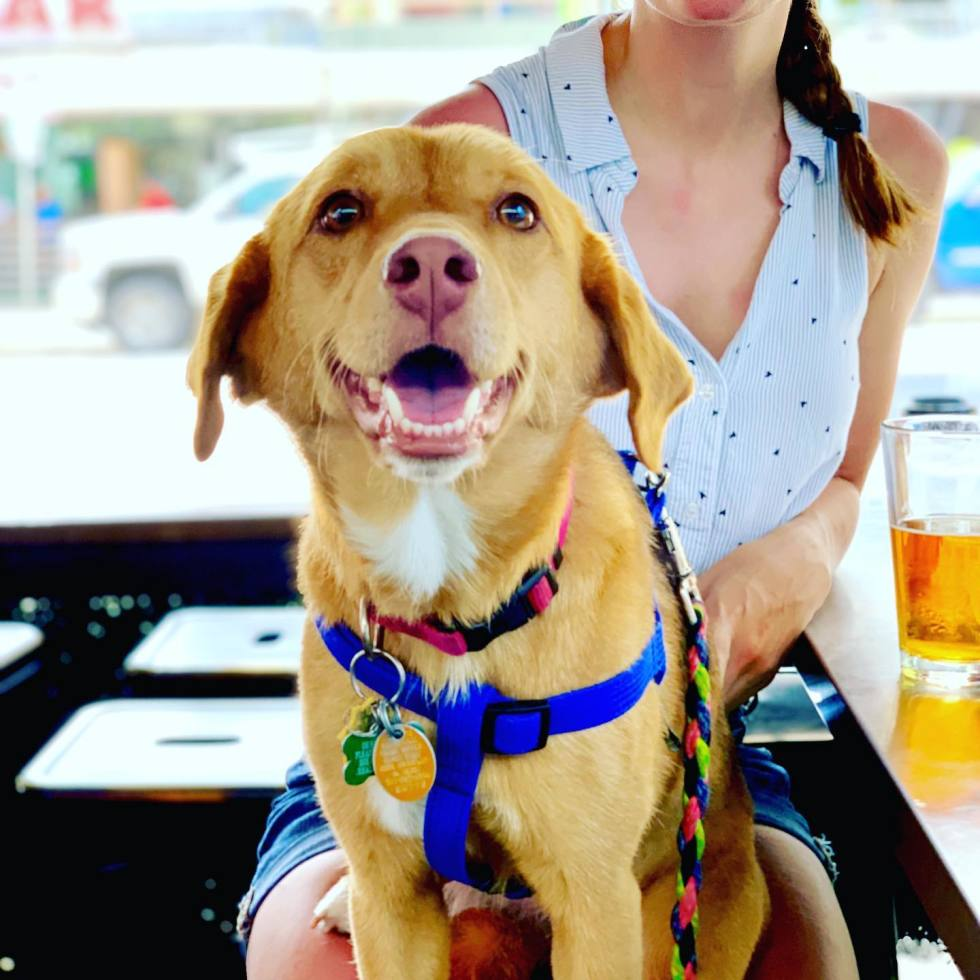 Dog and beer on a patio