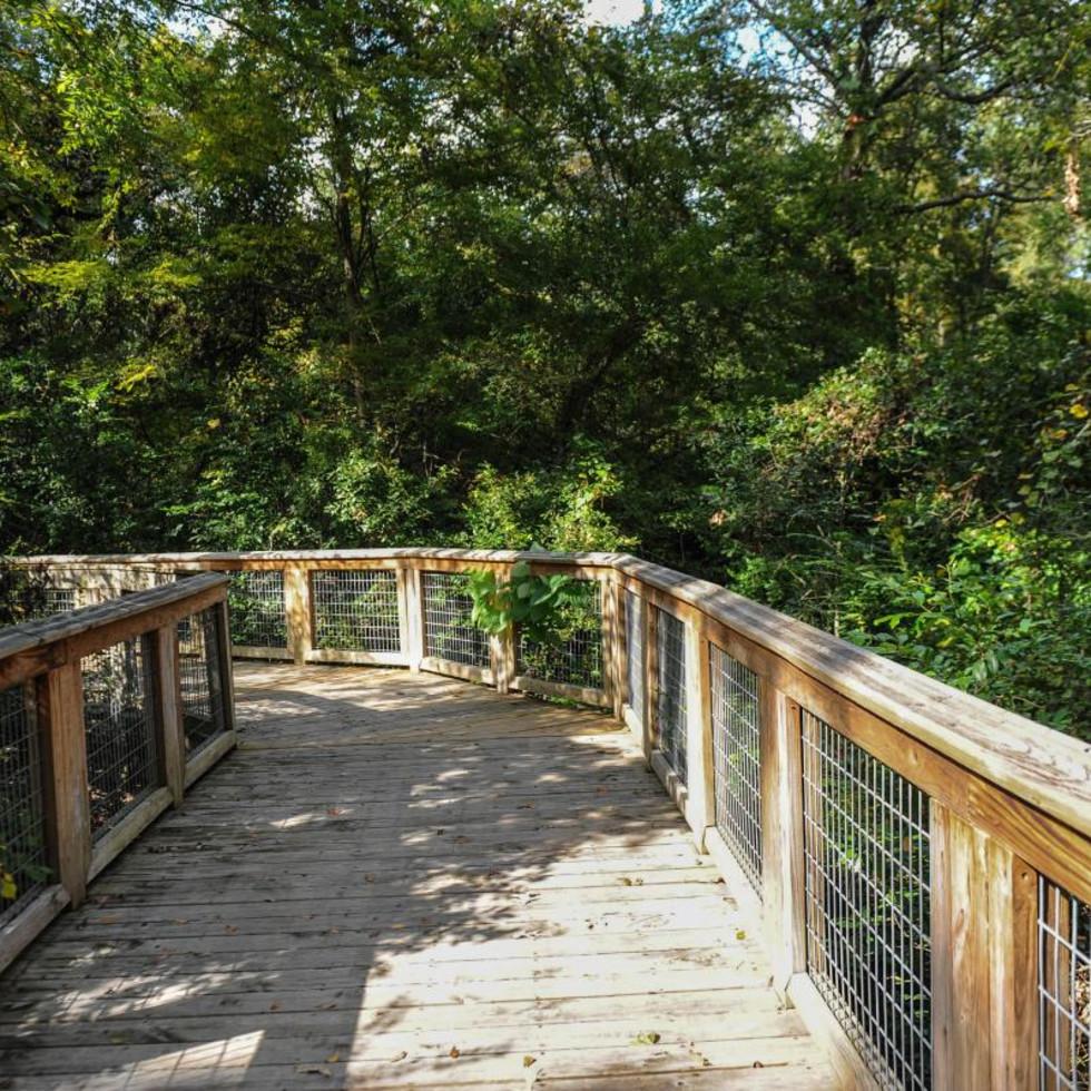 Bluebonnet Swamp trail