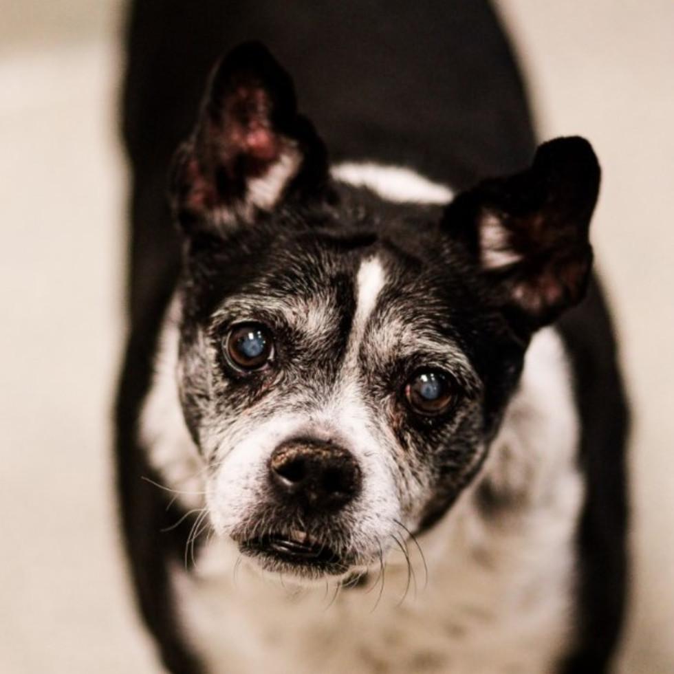 Adoptable dog Rascal