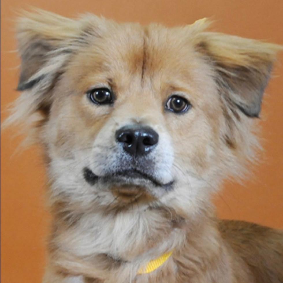 Adoptable dog Walter