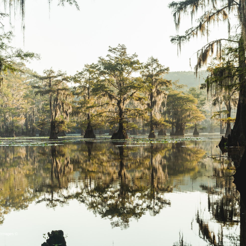 Best Texas State Parks HomeToGo 2021 Caddo Lake State Park