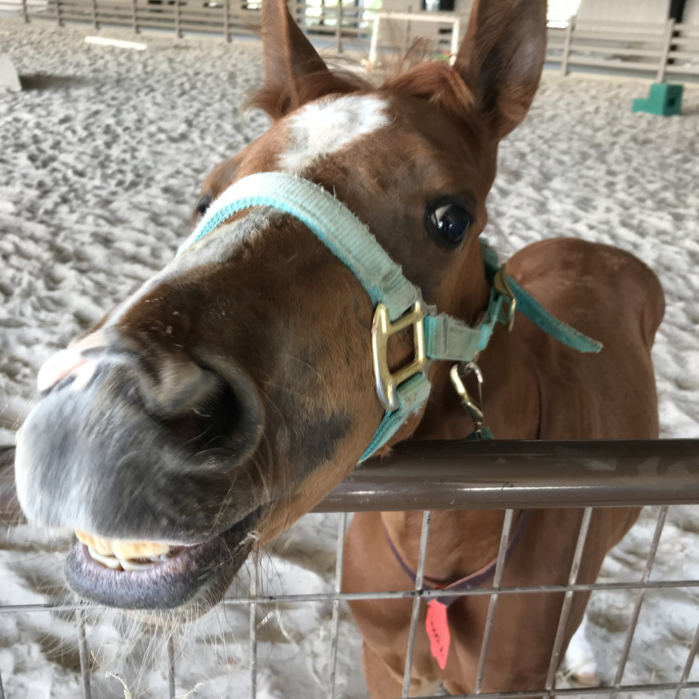 Close-up horse